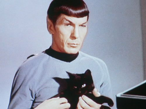 Live long and prosper: Warm Kitty, Funny Cat Pictures, Stars Trek, Leonard Nimoy, Startrek, Spock, Black Cat, Cat Photos, Furry Friends