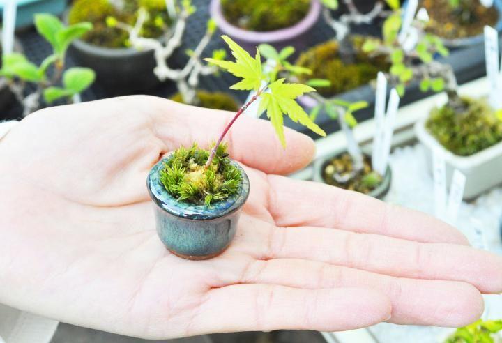 「まめ盆栽」「超ミニ盆栽」とは、手のひらに乗るほど小さな盆栽のこと。ミニサイズの愛らしい姿に、ファンが急増中です。「1000's BASE(センズベース)」のワークショップでは、樹木の選び方や育て方もていねいにレクチャー。気軽に盆栽を始められるとあって、県内外から人々が訪れています。