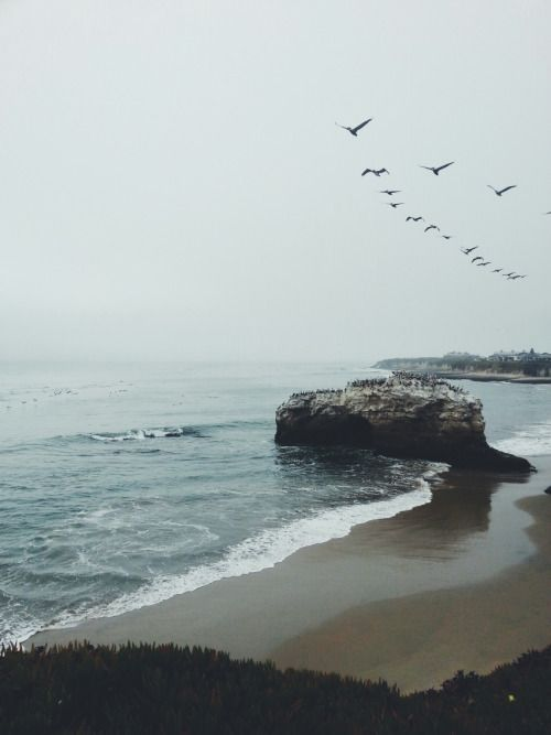 flight of the sea birds, scattered like lost words | nature photography #seascapes