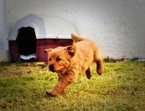 счастливый щенок - фото.