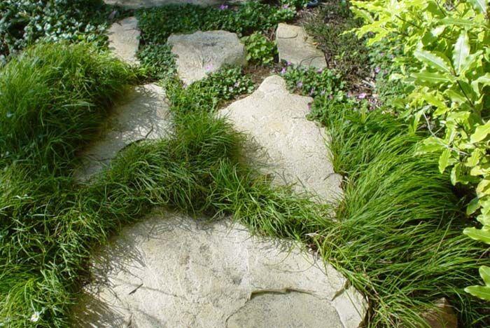 foto de vegetales de: Carex conica 'de los Beatles