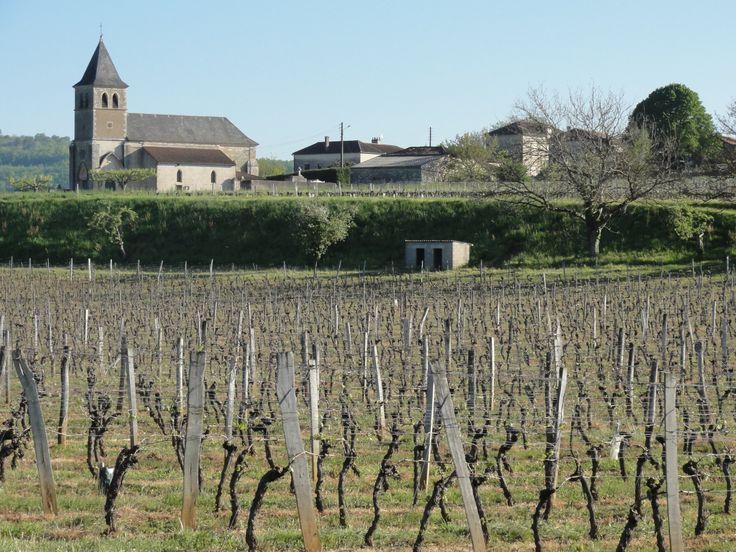 Joli paysage du vignoble de Cahors dans le sud ouest de la France.  #vignoble #cahors #vin #rouge #typique #viticole #vignes #terroir #ceps #domaine #caveosaveurs