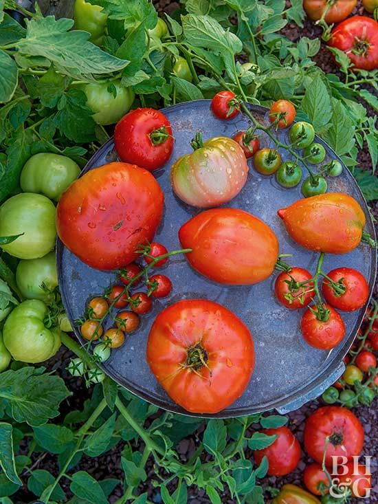 Growing your own garden at home will save you money and in almost every case, the flavor and texture of the homegrown vegetables far exceed grocery store produce. Start planning your vegetable garden with our tips.