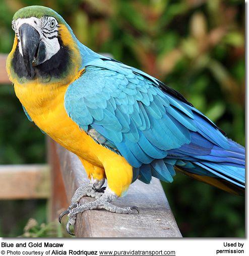Cupro Skirt - colourful parrots by VIDA VIDA Buy Cheap Factory Outlet z5sLCLZqrz
