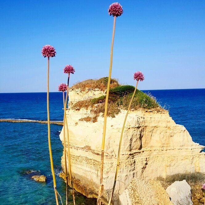 S. Andrea litorale salentino (Puglia)