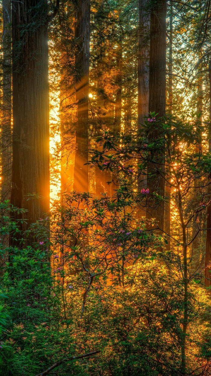 сегодняшний фото леса для смартфона должна быть