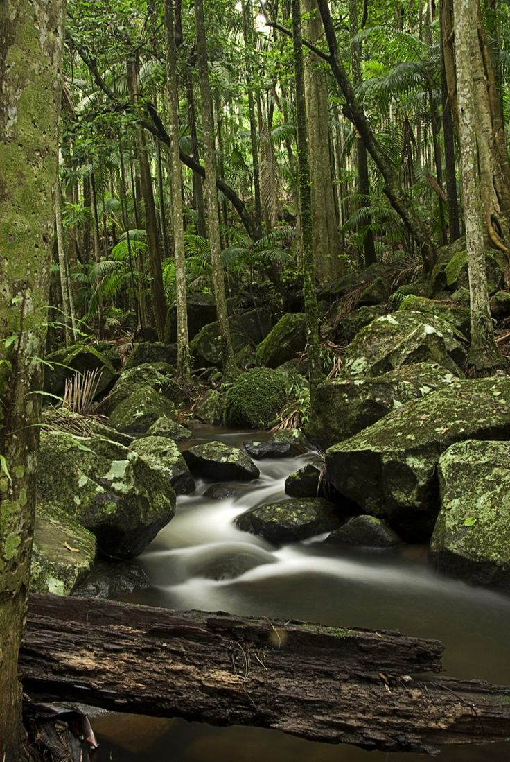 Tamborine Mountain National Park.  #thisisqueensland #seeaustralia #travel2next