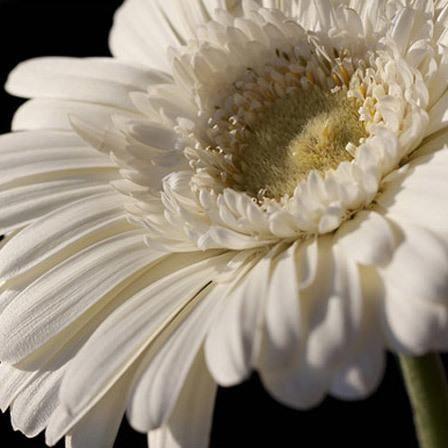 Flores blancas- yerbera