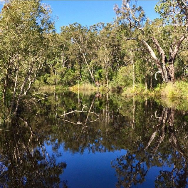 The picture perfect reflections of the Noosa Everglades!