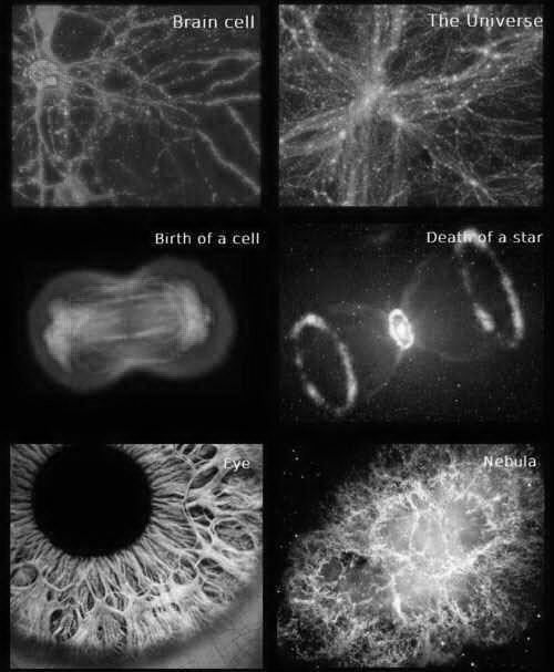 brain cell, universe. birth of a cell, death of a star. eye, nebula