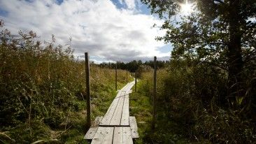 Nature is never far in Finland. Visitors can get a feel of real countryside in Helsinki, too, by heading to Viikki nature trails or visiting friendly cows.