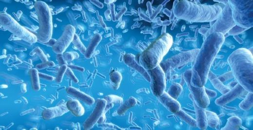 Infant gut bacteria may be associated with food sensitization during the first year of life