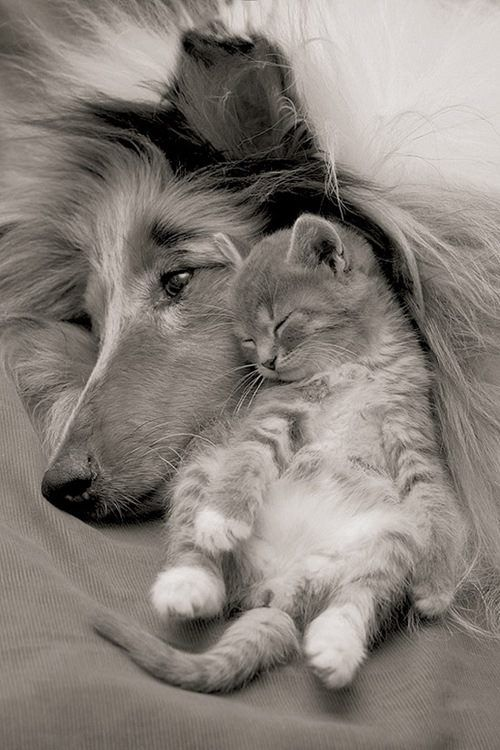 Risultati immagini per pictures sweet animals love you
