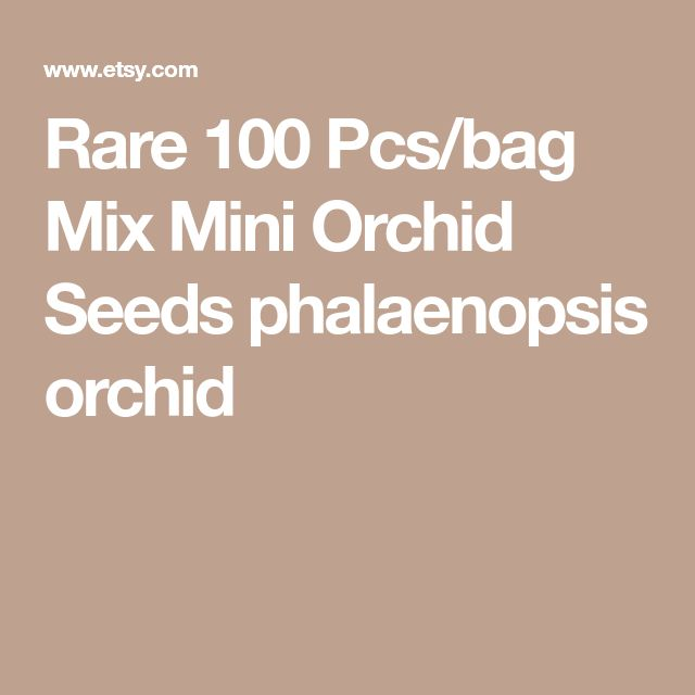Rare 100 Pcs/bag Mix Mini Orchid Seeds phalaenopsis orchid