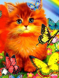 Cats and Dogs Blog: Cat and Butterflies