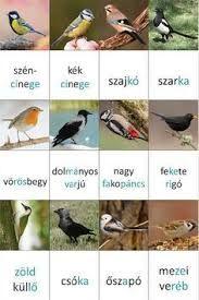 """Képtalálat a következőre: """"költöző madarak feladatlap"""""""