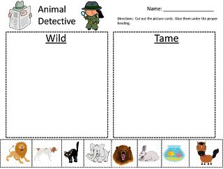 Wild Animals vs Tame Animals Kindergarten Sorting Activity