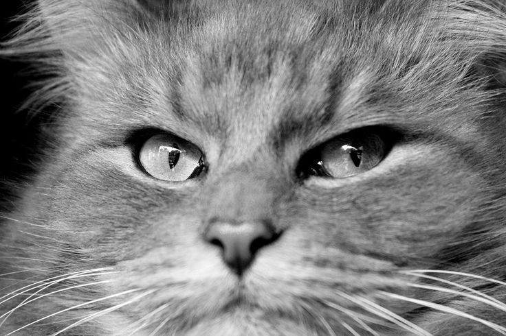 black and white, cat, eye, love
