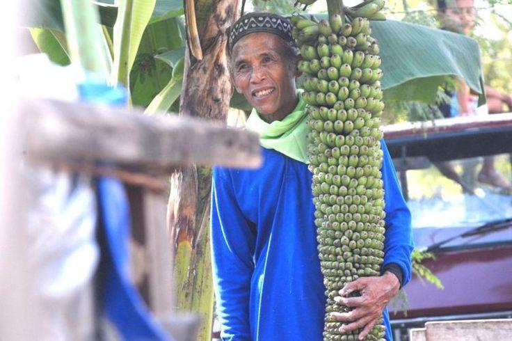 Heboh di Jakarta sepohon pisang tumbuh berbuah setandan   PendudukDesa Selo Kecamatan Tawangharjo Kabupaten Grobogan Jawa Tengah dekat sini heboh memperkatakan sepohon pisang yang berbuah agak unik lapor media tempatan.    Heboh di Jakarta sepohon pisang tumbuh berbuah setandan      Pokok pisang di halaman rumah milik seorang penduduk dikenali sebagai Ibnu Hisyam 65 itu menjadi tumpuan ramai kerana buah yang dihasilkan mencapai ribuan biji dan tumbuh subur pula tidak sebagaimana kelaziman…