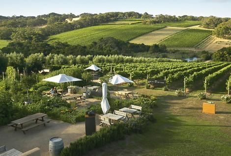 Montalto Winery, Mornington Peninsula