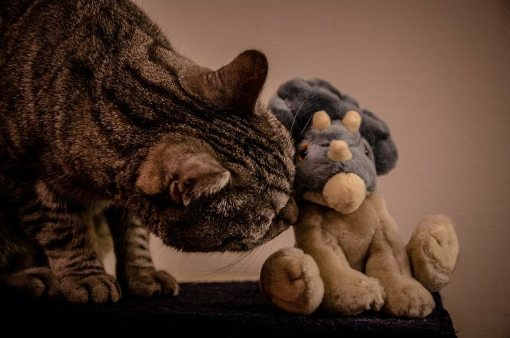 Cat and Dino by david pasmalin on 500px