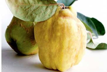 Ten secrets of quinces cooking tips - how_to cooking tips - Everything you need to know about this sweet, floral fruit.