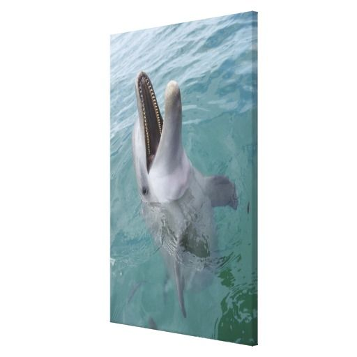 ==> reviews          Portrait of Common Bottlenose Dolphin, Caribbean Gallery Wrap Canvas           Portrait of Common Bottlenose Dolphin, Caribbean Gallery Wrap Canvas We have the best promotion for you and if you are interested in the related item or need more information reviews from the x ...Cleck Hot Deals >>> http://www.zazzle.com/portrait_of_common_bottlenose_dolphin_caribbean_canvas-192555451379506446?rf=238627982471231924&zbar=1&tc=terrest