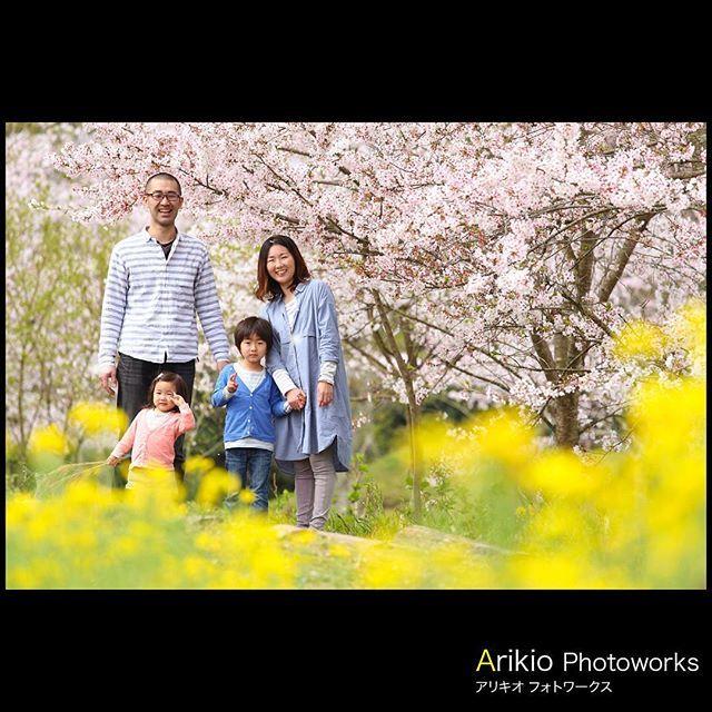 【arikio.pw_ryuzo.yamaji】さんのInstagramをピンしています。 《・ 気さくな、町の写真屋さん、あなたの町へ伺います。・ ・三重・愛知・岐阜・滋賀・奈良・全国どこでも#出張撮影 ・ 3月から4月の#サクラ・ 10月から11月の#紅葉・ ・ この気候の良い時期は撮影が集中します。お早めのご予約をお勧めします。・ ・#桜ロケーション撮影 #結婚式当日撮影 #披露宴撮影 #入学式 #入園式 ・ Arikio PhotoWorks のホームページ・ ・http://www.arikio.com ・ wedding & family photo・ ・出張ロケーション撮影専門カメラマン ・ #桜 #さくら #七五三 #お宮参り #三重 #四日市 #ロケーションフォト #地元 #写真屋さん》