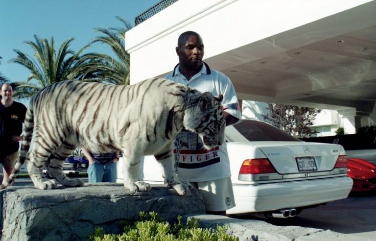 Who ever said Mike Tyson had financial misfortunes? He was able to buy two white Bengal tigers for $140,000, spent thousands to create a habitat for them, and spends $125,000 a year for an on-call animal trainer.