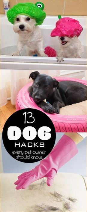 13 Dog Hacks Every Pet Owner Should Know.  Tips and tricks for caring, cleaning and keeping dogs happy and healthy.
