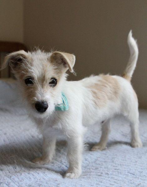Want!!! Jacob's new best friend!