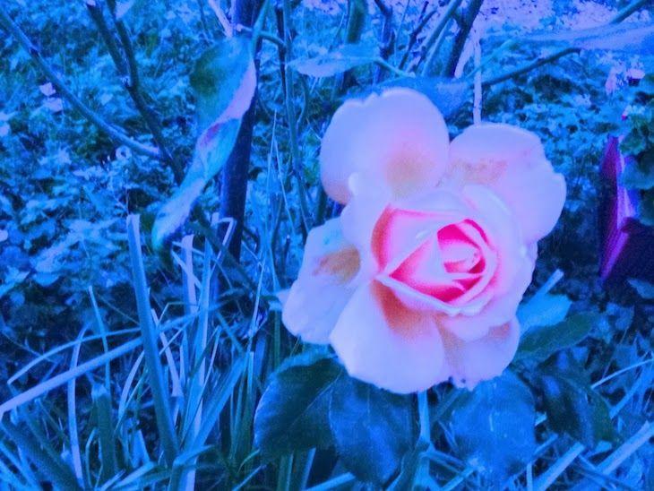 #girl #leggings #floral #style #fashion #sweatshirt #flower #birds #streetwear #italy #winterfashion #falloutfit  #roses #colors  #flower THE FASHIONAMY by Amanda: Fiori e Colibrì - idea outfit leggings stampati e felpa #Alfa Omega Brand