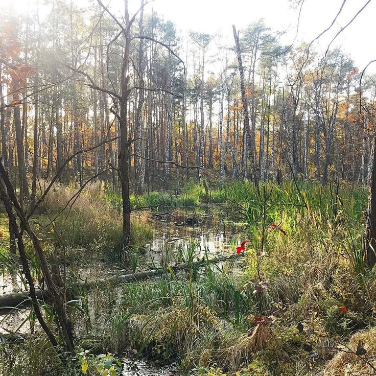 Kampinos National Park. . #familywalk #walkwithkids #homeschooling #homeschoolingmom #homepreschool #autumn #familytrip #kampinos #kampinoskiparknarodowy #kampinosnationalpark #lake #pond #forest #autumnforest #simplelife #theartofsimple #slowlife #slowliving #relax #recharge #forestbathing #colorfulleaves #wildnature #explore #perfectday #perfect #day #landscapephotography #neverstopexploring #getoutside