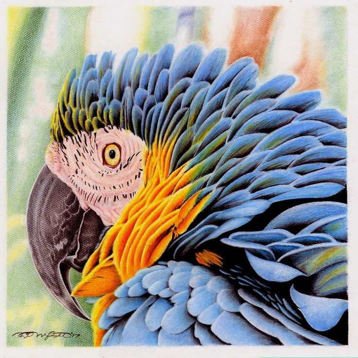 """I See You"" Coloured Pencil & Pastel Drawn by: Michael McIntee"