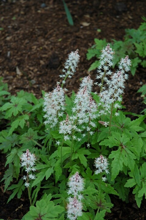 70 best plants for eastern exposure images on pinterest