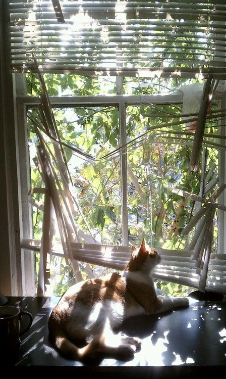 259 Best Cats N Mini Blinds Images On Pinterest