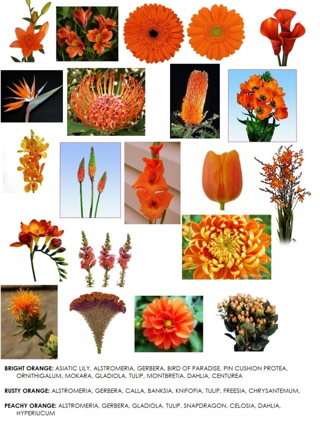 best flower names images on, Beautiful flower