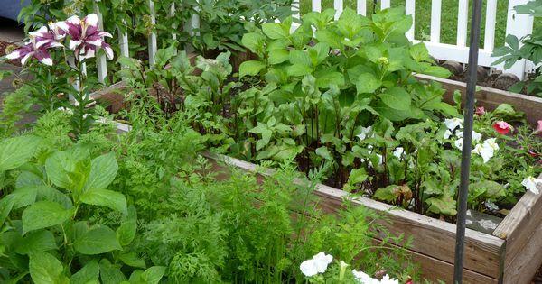 Mit einem Hochbeet kannst du auf kleinem Raum das ganze Jahr gesundes Gemüse ernten. Was du beachten solltest und wie du dein eigenes Hochbeet baust.