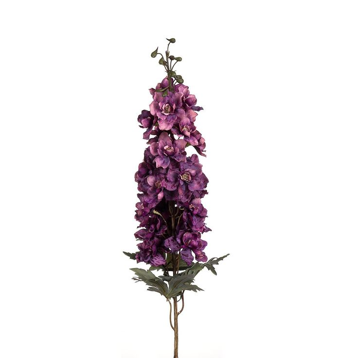 hazeran çiçeği ile ilgili görsel sonucu