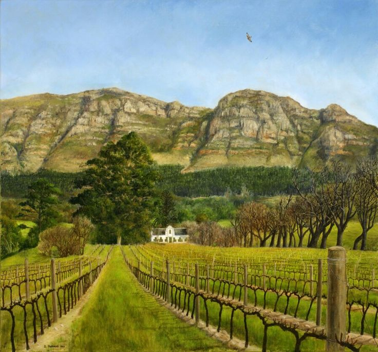 Buitenverwachting - Oil on Canvas. 530 x 570 mm. The Buitenverwachting Manor House and Sauvignon Blanc vineyard in winter after pruning. I worked briefly on this beautiful farm in 2012. I painted this standing in the vineyard. This was also painted before the big fire in 2015 destroyed most of the pine forest. A Steppe Buzzard soars overhead in the open sky. I love how these birds fly all the way down from Russia for our South African summers.