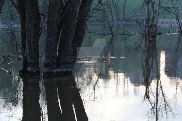 #crepuscolo al parco lambro , laghetto e anatre by IrreveRender
