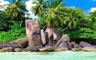 Scarica sfondi Maldives, spiaggia, palme, isole tropicali, estivo, oceano