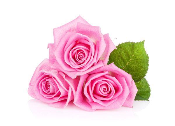 trandafirii-cataratori-1.jpg (600×433)