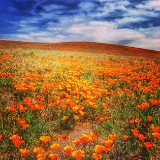 antelope valley california poppy reserve | Things to Do in Lancaster, California | Travel to United States Photos, Guides, Itineraries