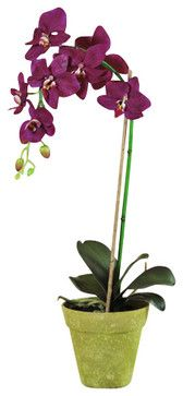 """Phalaenopsis Orchid in Pot, 22"""", Beauty - traditional - Artificial Flowers - Jane Seymour Botanicals"""