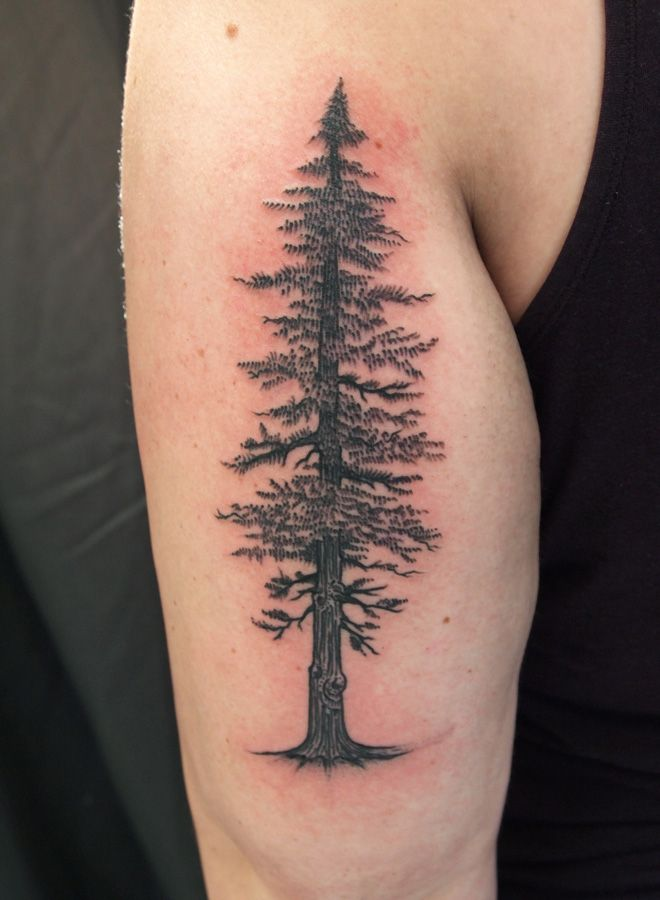 Tree tattoos for women on arm the image for Ponderosa pine tattoo