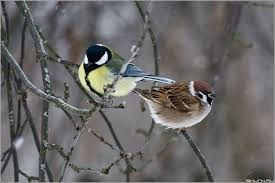 Bird feeding in winter, relax sleep music, Relaxing sounds, relax, relaxation, birds in winter, birds sound, relax sound, sound effects, nature sounds, nature sounds from rural areas, relax video, best relax video, best video, farmhouse sound