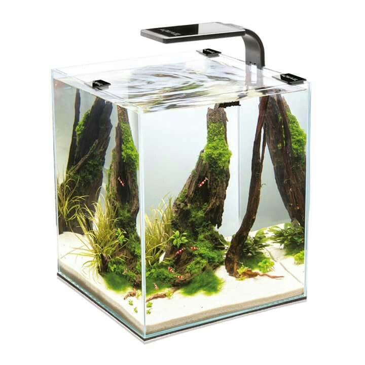 17 best ideas about betta tank on pinterest betta fish for Fish that get along with betta