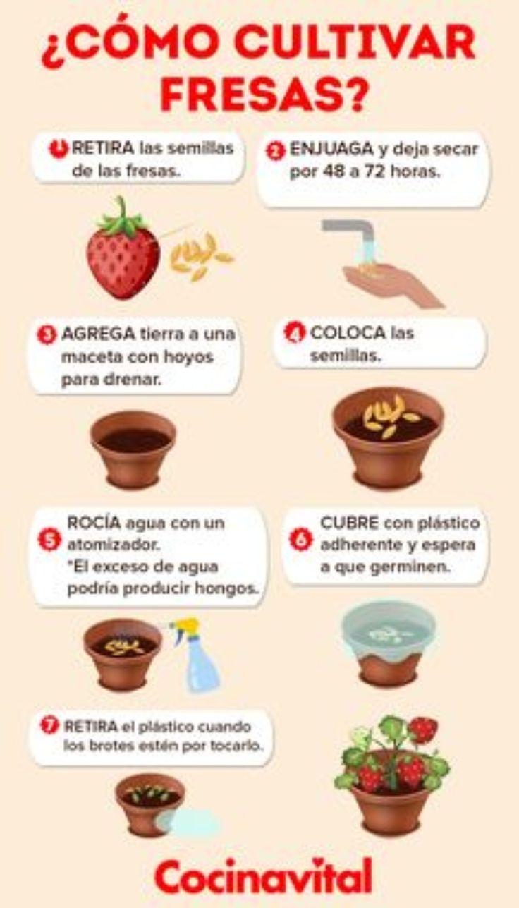 Seque El Vientre Y Póngalo Plano Mejores Consejos Receta Frutas En Macetas Plantas Para Cocina Cultivar Fresas