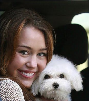 celebs with their dogs   Miley Cyrus With Their Dog